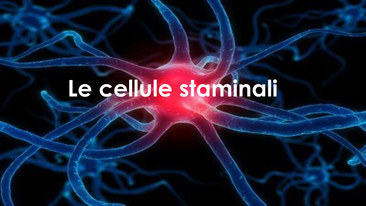CelluleStaminali
